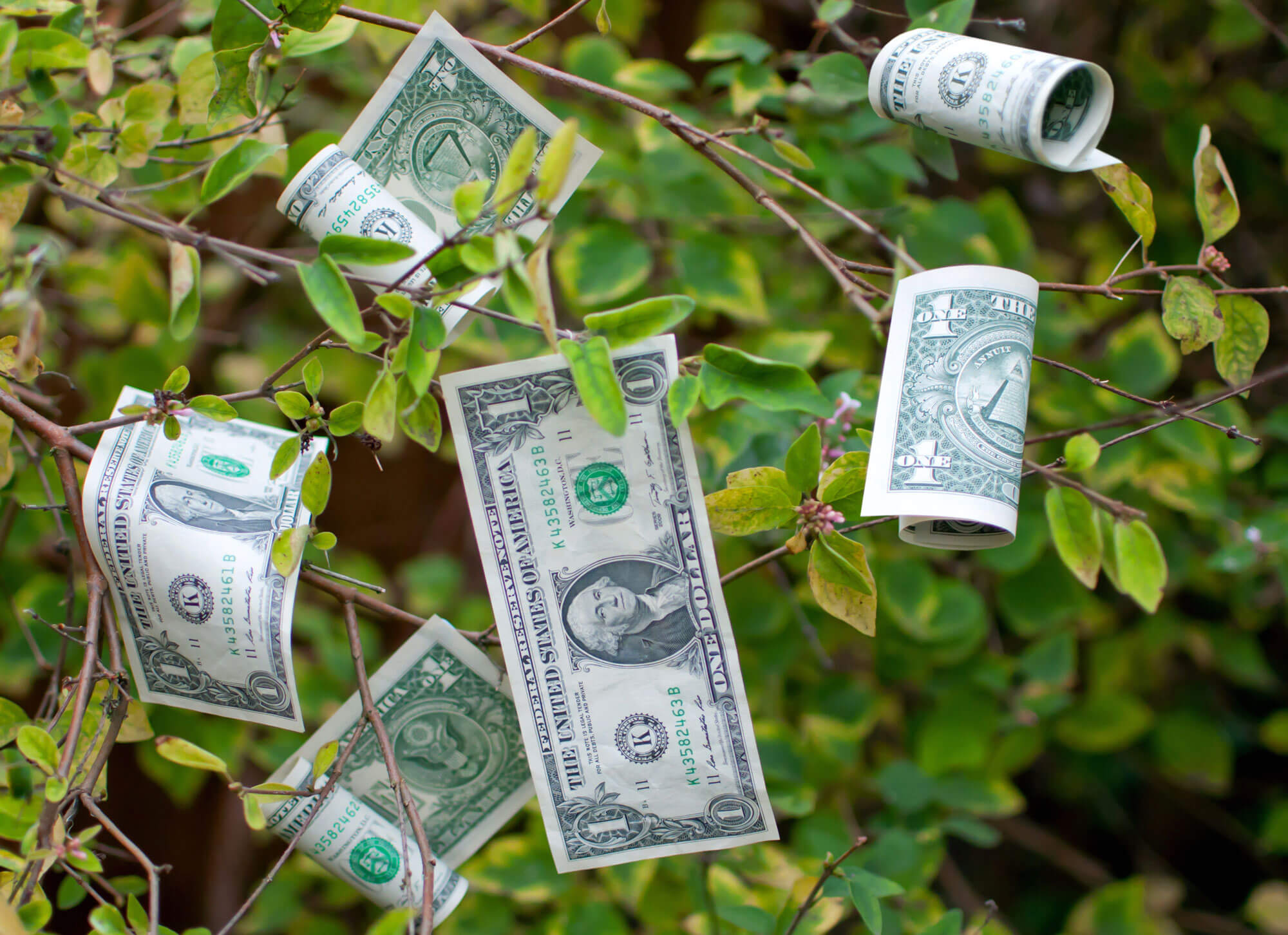 Money grows on trees cryptocurrency